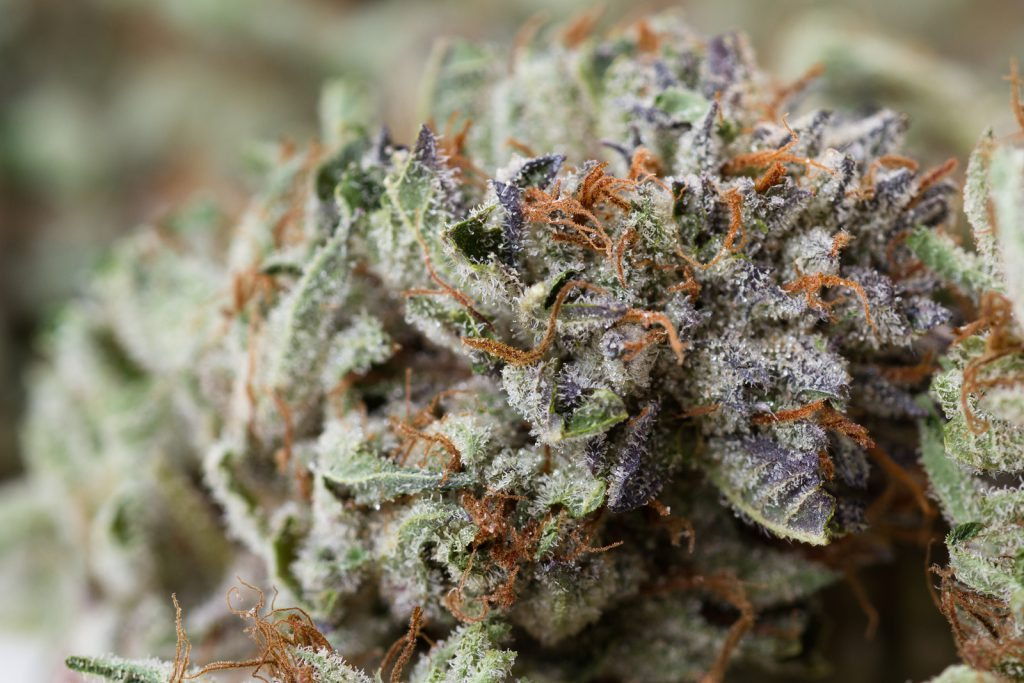 closeup of medical cannabis
