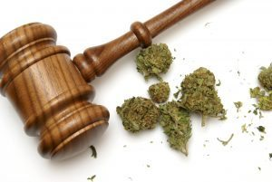 cannabis pictured next to brown gavel