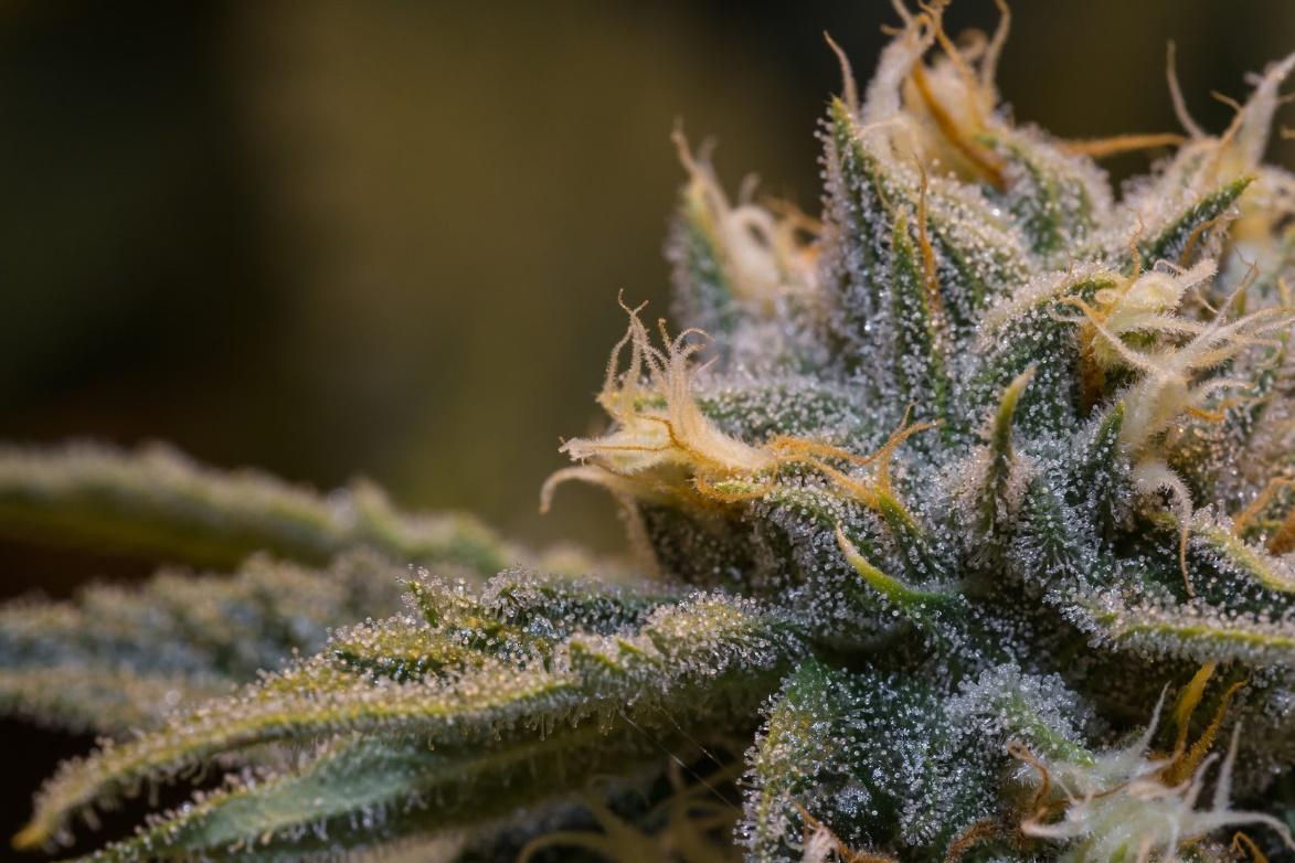 medical marijuana card ma